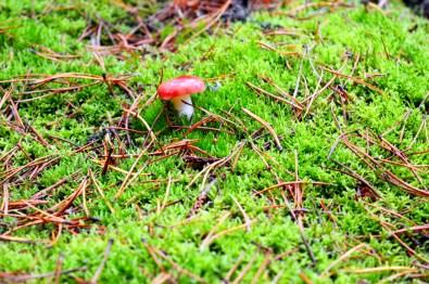 Nature atmosphere | Dutch Island Vlieland Autumn Weekend © Coupleofmen.com