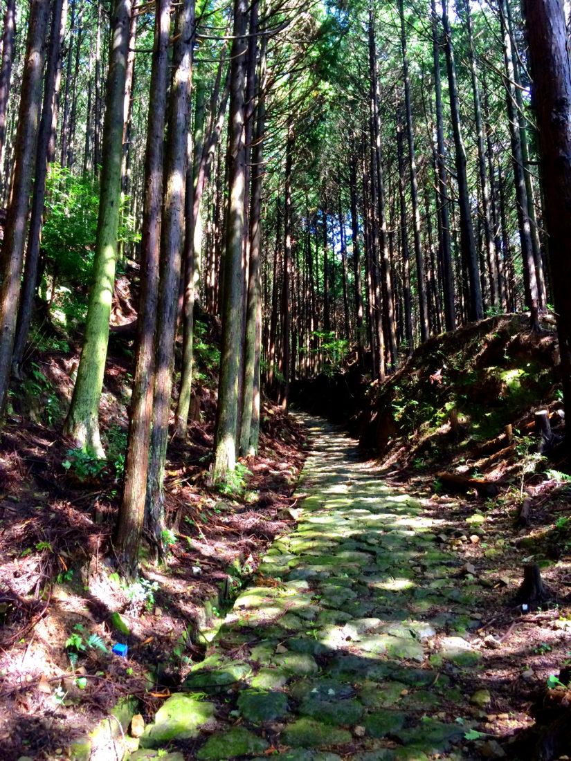 Ancient trails | Gay Couple Pilgrimage Kumano Kodo Japan © CoupleofMen.com