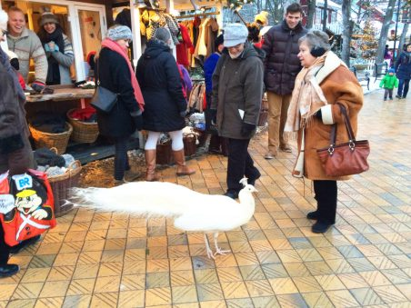 Peakcock meets Christmas Market | Gay Travel Guide Tivoli Gardens Copenhagen Winter © Coupleofmen.com