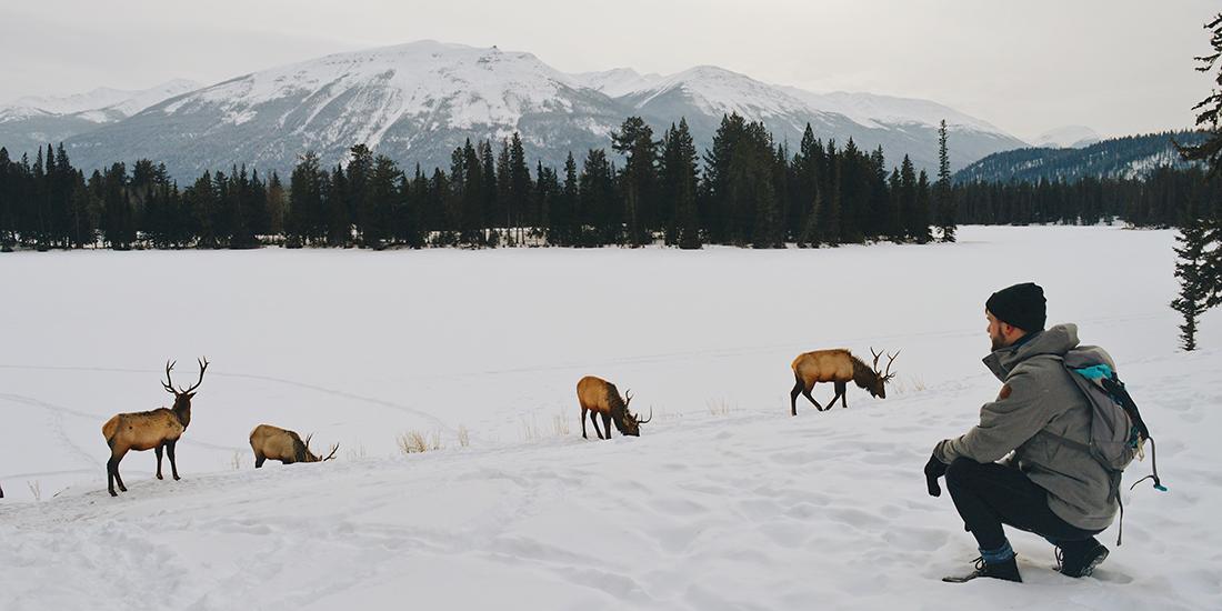 Wildlife around Fairmont Jasper Park Lodge Alberta Canada © CoupleofMen.com