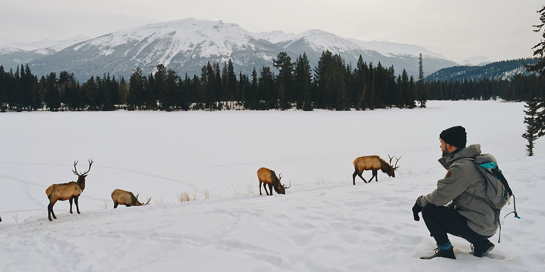 Wildlife around Fairmont Jasper Park Lodge Alberta Canada © CoupleofMen.com