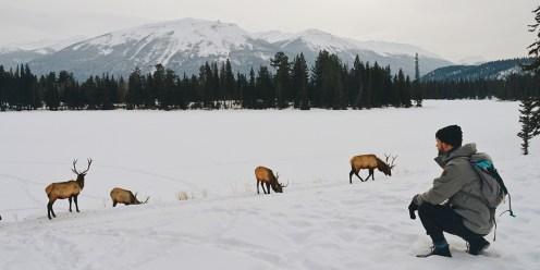 Gay Winterreise Kanada Wildlife around the lake of the lodge © CoupleofMen.com