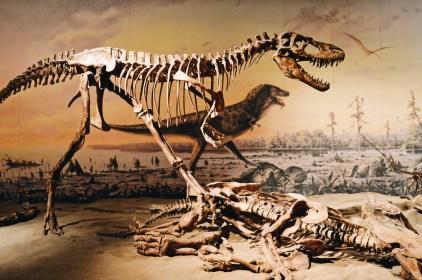 Albertosaurus | Dinosaurs Royal Tyrrell Museum Palaeontology Drumheller Alberta Canada © CoupleofMen.com
