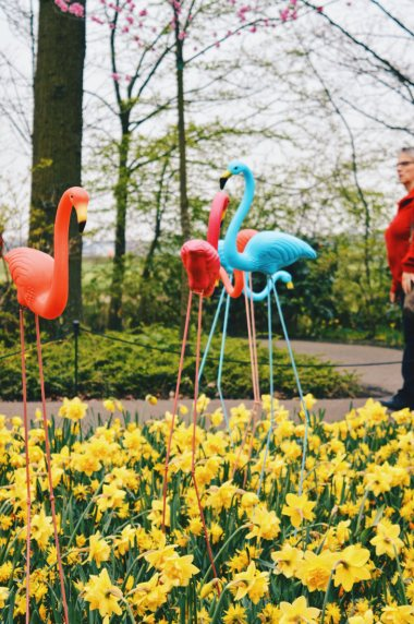 Good for you if you have long legs like the flamingos here | Keukenhof Tulip Blossom Holland © Coupleofmen.com
