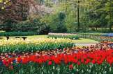 Made to take a picture! | Keukenhof Tulip Blossom Holland