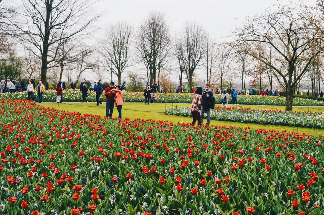 An ocean of flowers and colors   Keukenhof Tulip Blossom Holland © Coupleofmen.com