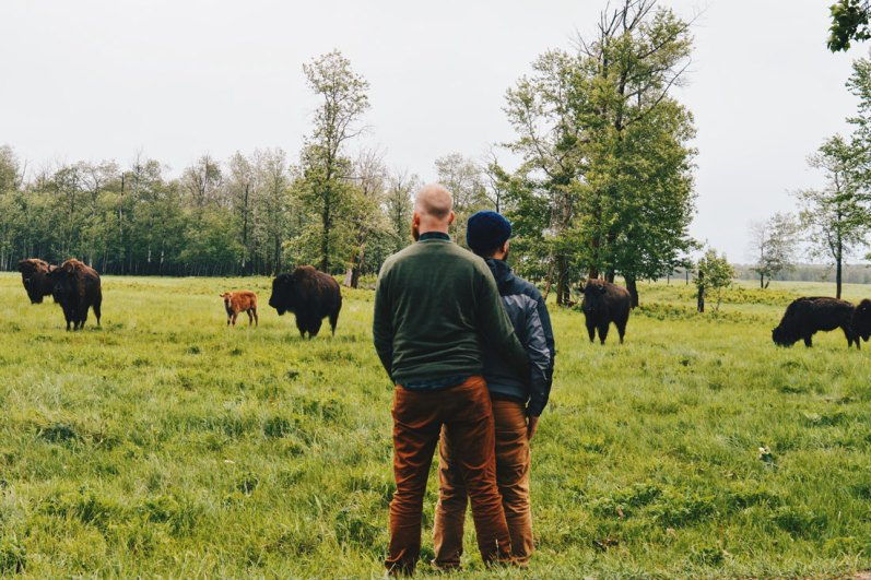 Watching Bisons arm-in-arm at Elk Island National Park East of Edmonton | Road Trip Edmonton Northern Alberta © Coupleofmen.com