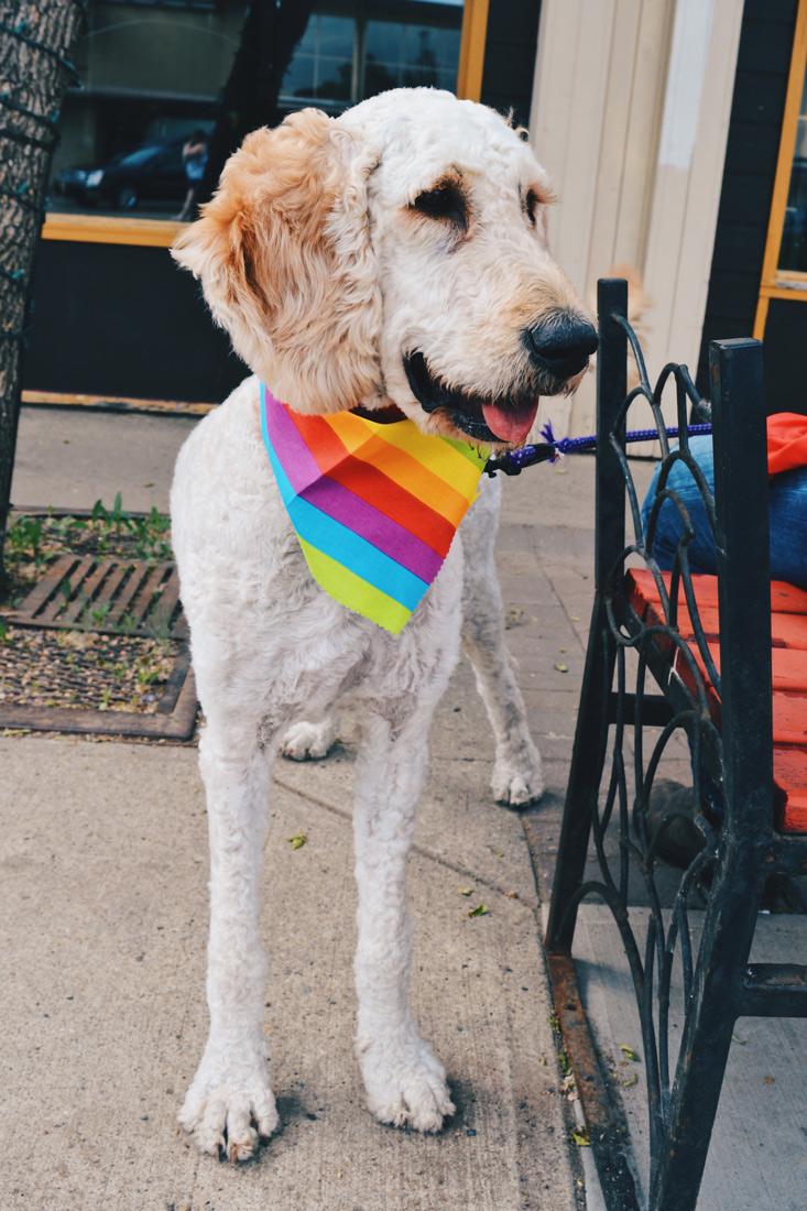 Everyone loves dogs in Alberta's Capital City | Gay Edmonton Pride Festival © Coupleofmen.com