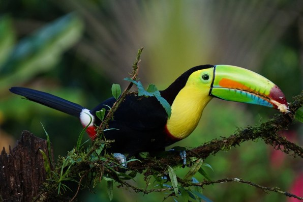 Keel-billed Toucan | Costa Rica Gay Travel Guide (Foto: Pixabay)