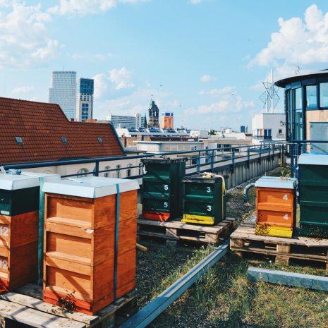 Rooftop is home for thousands of Honey Bees | Scandic Berlin Kurfürstendamm gay-friendly Hotel © Coupleofmen.com