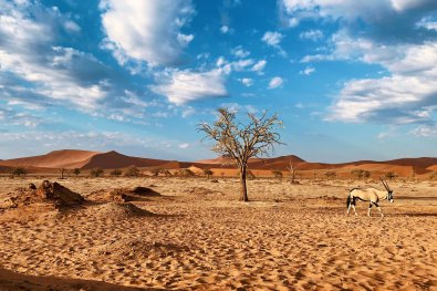 Oryx walking through the picture of the stunning landscape of Sossusvlei © Coupleofmen.com