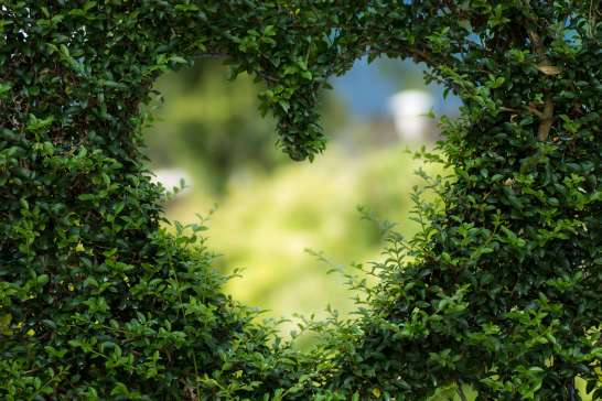 Photo of heart in a bush. Couples & marriage counseling for new parents during & after pregnancy in the Cincinnati area. 45226