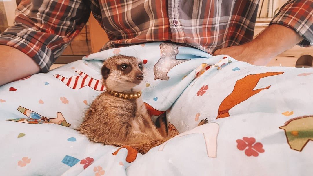 Meerkat Cafe Seoul – the Quirky cafe you won't want to miss!