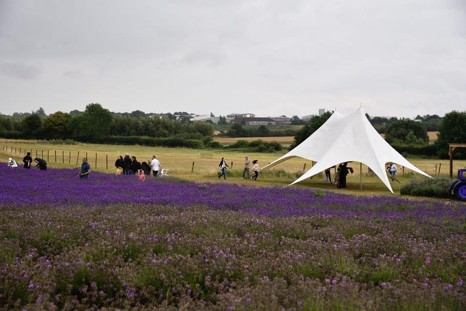 Hitchin-Lavender-Farm-England-UK
