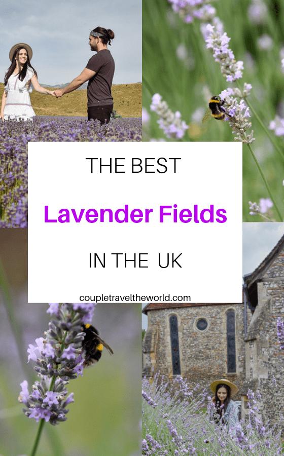 Lavender-fields-in-the-UK