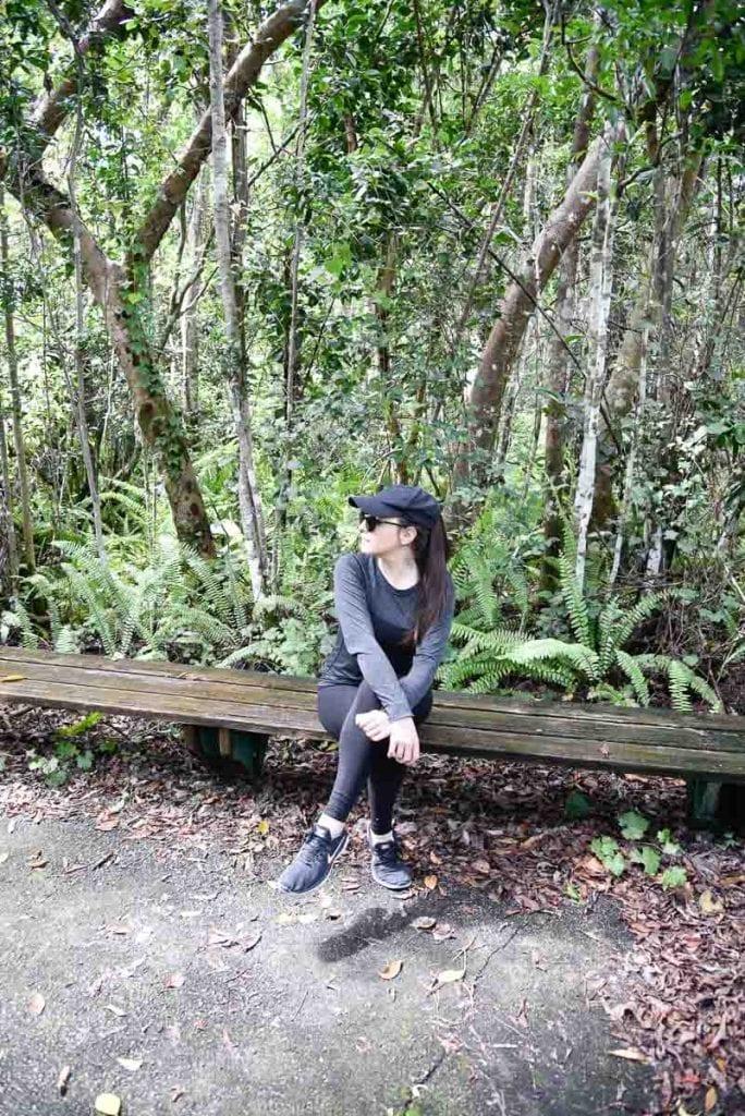 Gumbo-Limbo-trail-everglades