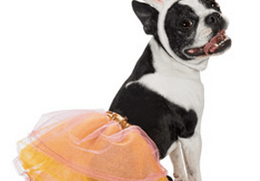 Petco.com: Free Shipping, No Minimum Purchase + up to 50% off Pet Halloween Costumes Starting at $3.99