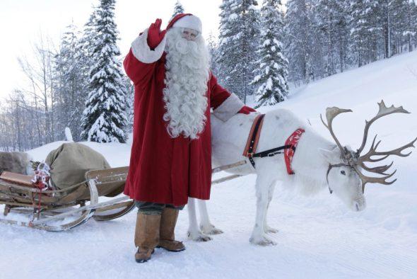Un renne du père Noël en Laponie