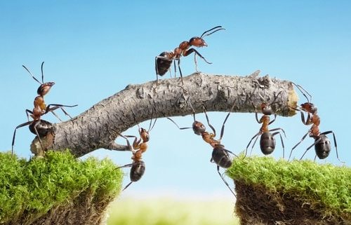 7 differences between a group and a team