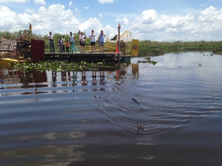les Everglades MIAMI FLORIDE
