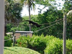 Zoo de Naples / Floride