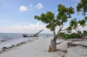 Plage de Pavilion Key dans les 10 000 Islands des Everglades (© Naples Marco Island Everglades CVB)