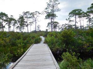 Jonathan Dickinson State Park - Jupiter - Floride - Forêt