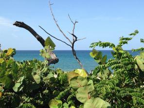 Palm Beach : John D. MacArthur Beach State Park, plage, snorkeling