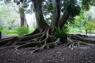 Sarasota Selby Garden