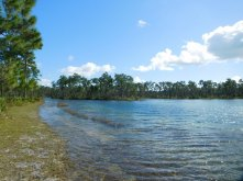 Lac et forêt de pins - Big Pine Key (Flamingo -Everglades national Park)