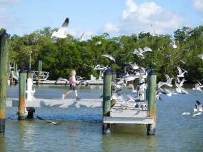 Port de Flamingo -Everglades national Park)