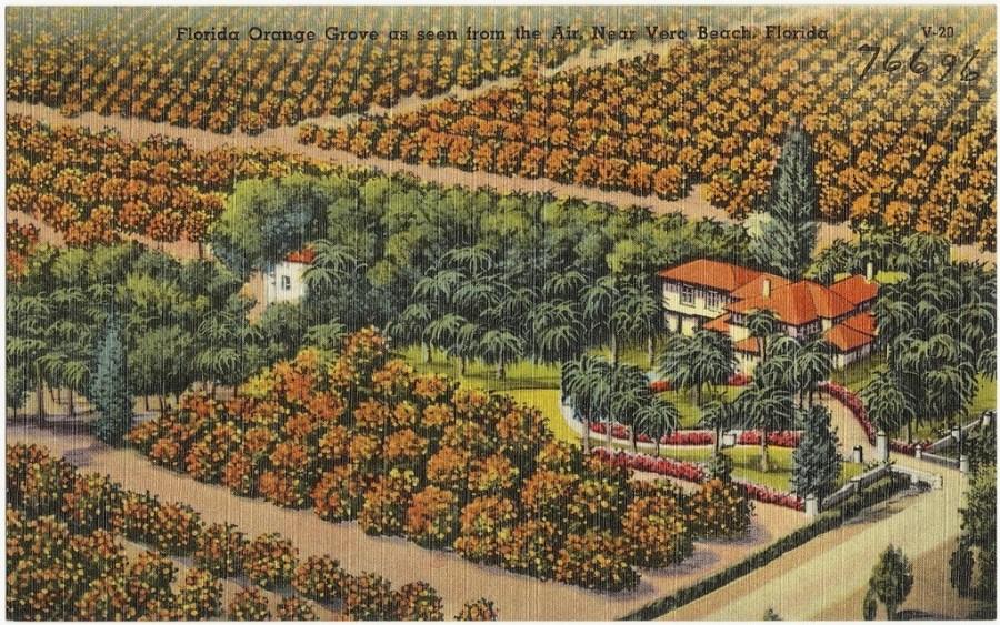 Carte postale des années 1930-1940 d'une plantation près de Véro Beach (photo : Boston Public Library - C BY 2.0)