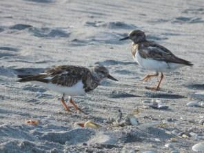 Oiseaux à Hobe Sound National Wildlife Refuge / Floride