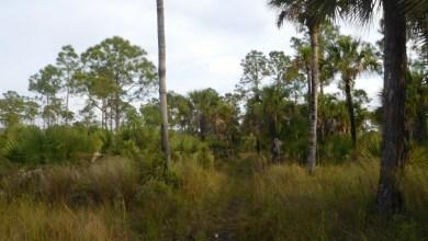 Photo of Marche, photo, et location d'un cottage au milieu des Everglades