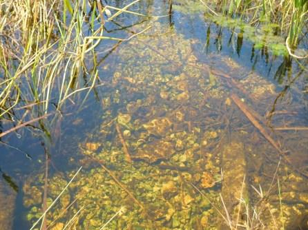 Marais à Shark Valley / Parc National des Everglades