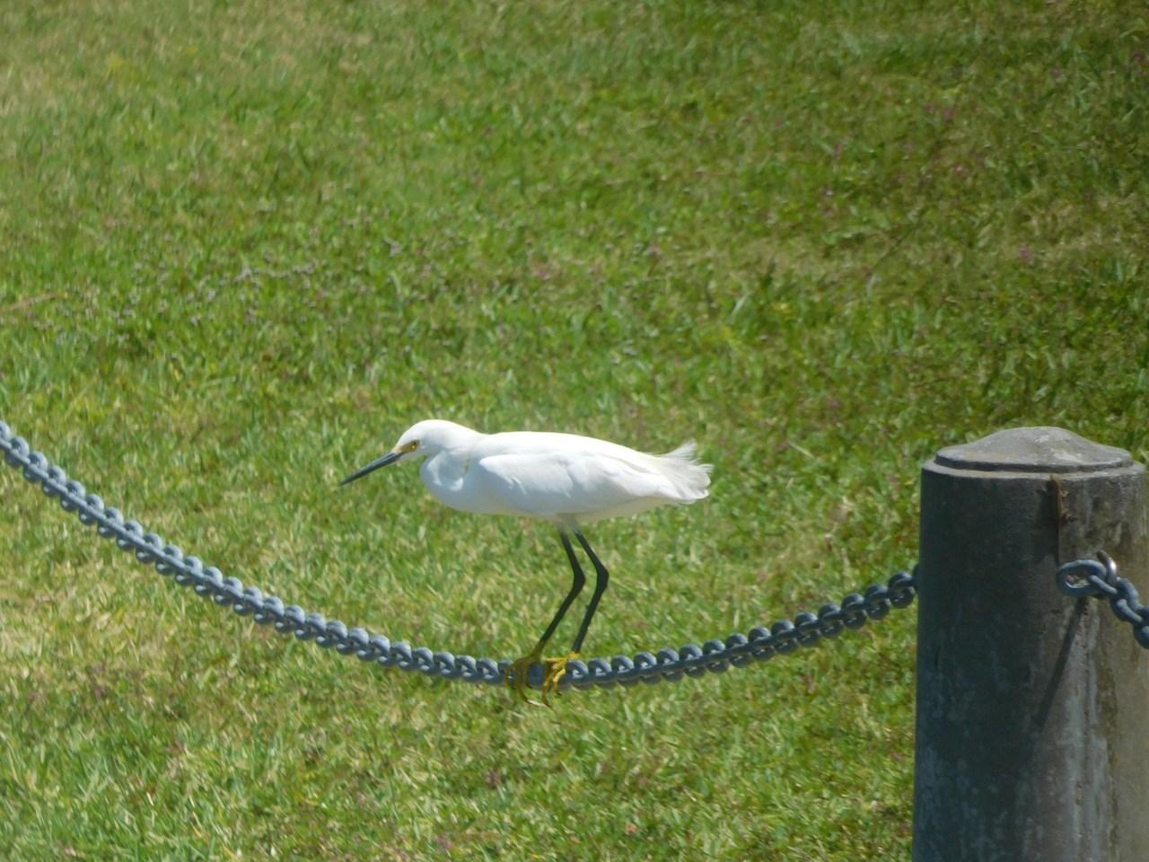 Oiseau à la Ca' dZan Mansion au Ringling Museum à Sarasota / Floride