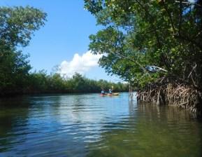 Kayak à Oleta River State Park / Miami Beach
