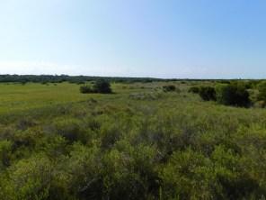 Dunes et plages d'Anastasia Island State Park (St Augustine)