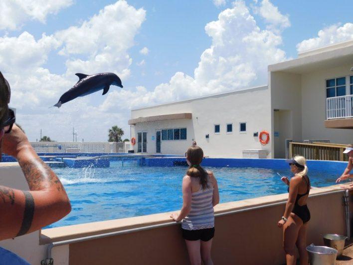 Les dauphins du Marineland de St Augistine en Floride
