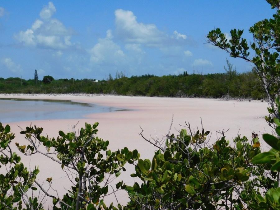 Marécages roses à Grassy Key, Keys de Floride
