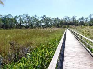 Corkscrew Swamp Sanctuary (Audubon Center dans les Everglades à Naples / Floride)