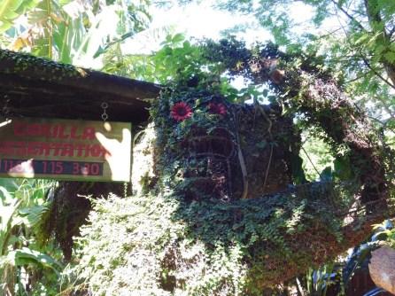 Singes à Monkey Jungle (à Homestead, au sud de Miami)