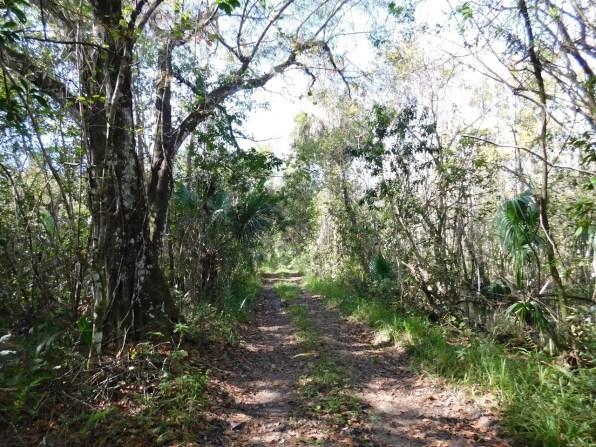 Fakahatchee : Janes Memorial Scenic Drive