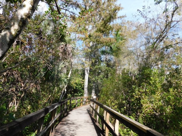 Fakahatchee Boardwalk (Everglades)
