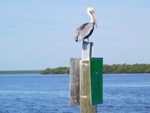 Les 10000 Islands des Everglades (Floride)