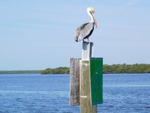 Les 10000 Islands des Everglades (Floride)