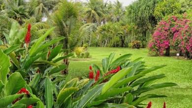 Photo of Un beau jardin de plantes et de fleurs tropicales en Floride !