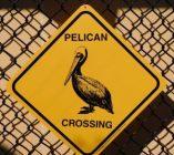 Pelican Harbor Seabird Station à Miami