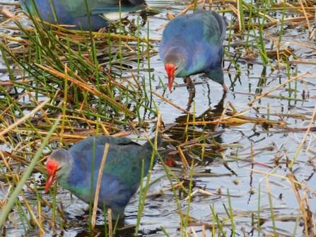 Green Cay Park / Everglades / Boynton Beach / Floride