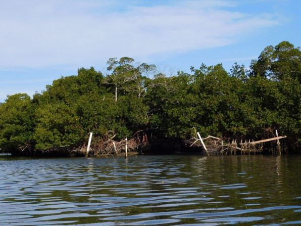 Mangrove de Lovers Key en Floride
